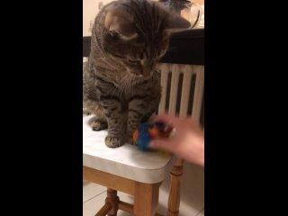 Игра, в которую кот всегда выигрывает