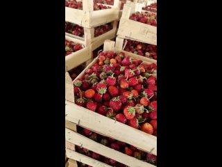 Видео от Дикорос ЭКО ягоды грибы