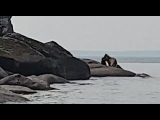 Видео от Владислава Лидера