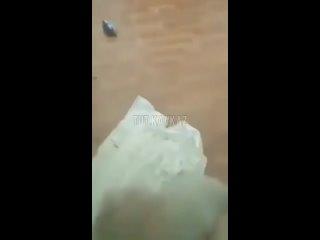 Видео от Родители города Кирова