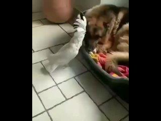 Video by ПЕРМЯКИ (Подслушано Пермь)