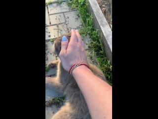 Sveta Polkovodtsevatan video