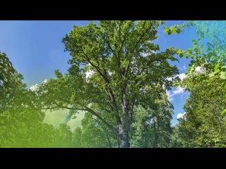 Видео от Детский сад № 63 г. Орла