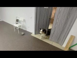 Video by Великолепная пятерка и Безухов