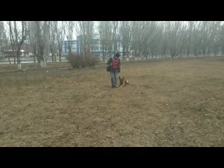 Дрессировка собак. Дрессировка уже взрослой собаки🐶🐩 Мира на занятии🧮📐📕📘📗 (1).mp4
