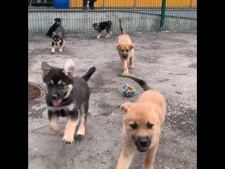 Видео от Центр реабилитации животных «Юна»