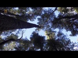 "History Channel: В изоляции / Alone / Сезон 3 Серия 3 ""Eternal Darkness"""