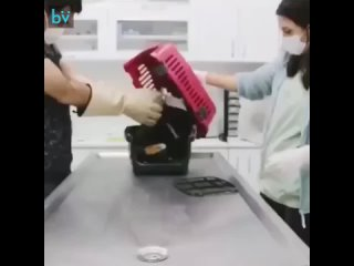 На приёме у ветеринара