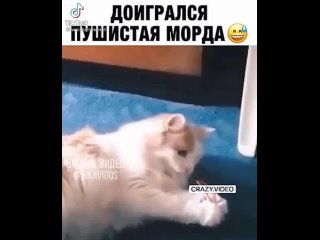 Yegor Petryaniktan video