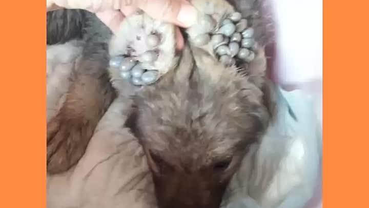 Видео от Хатико-Г-Уральск Помощь-Бездомным-Животным