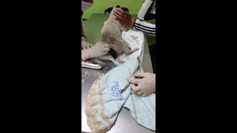 Видео от Наргизы Каримовой