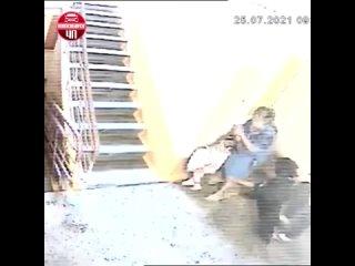 Нападение собаки на Кошурникова, 41. Новосибирск