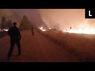 Пожарные спасают оленёнка