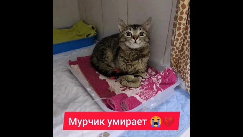 Видео от ИМ НУЖНА ПОМОЩЬ