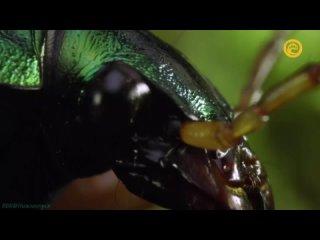 «Макромиры (3). Жуки: Любимцы небес» (Познавательный, природа, животные, 2017)