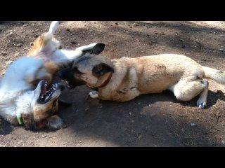 """Video by """"ДОБРОЕ СЕРДЦЕ"""" г. Зеленогорск. Помощь животным"""