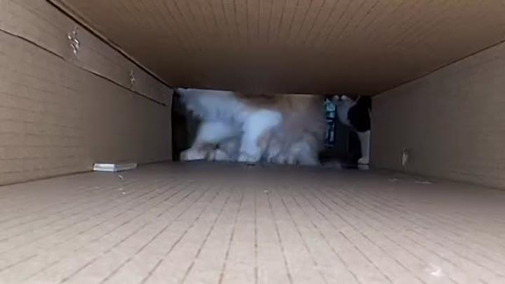 Видео от КОРМА для собак и кошек Челябинск | FOOD PET
