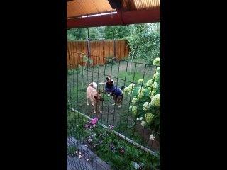 Видео от Животные в добрые руки!!! Волгореченск