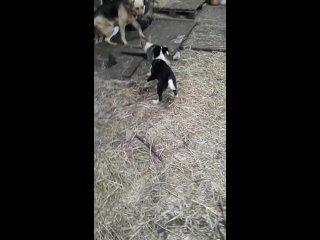 щенки гуляют