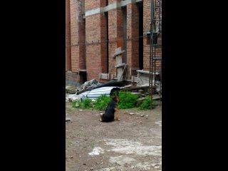 Видео от Елены Липатовой
