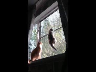 Video by Svetlana Boldina