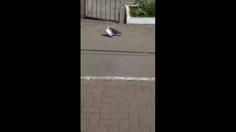 голубки 22 07 21