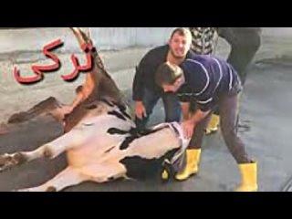 Видео от Raja Jahangir