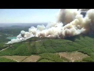 В Турции в лесном пожаре пострадали более 50 человек