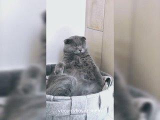 Video by Группа помощи кошкам Ломоносова