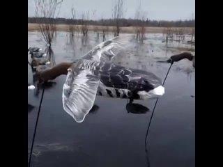 Видео от Flock Decoys