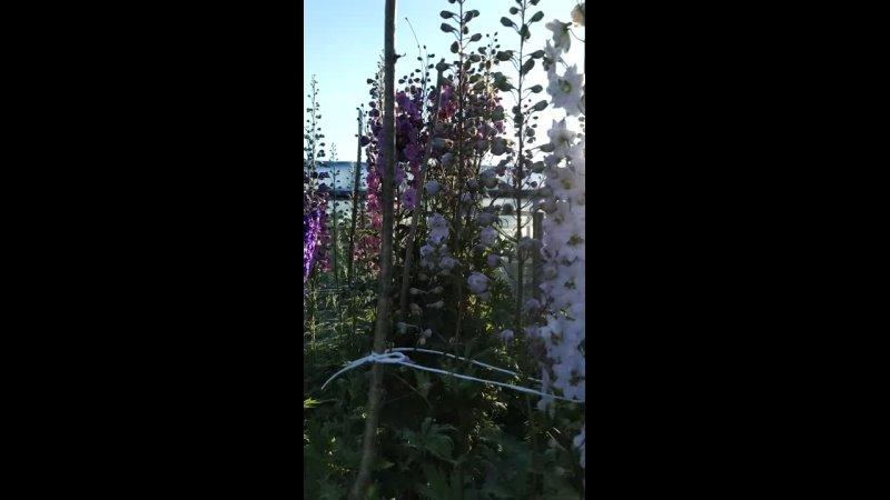 Видео от Домик на опушке