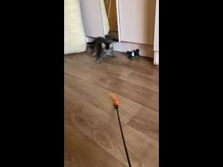 Video by Tatyana Shimanchik