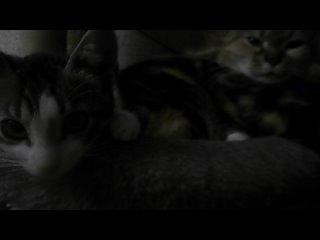Video by Хижина Дяди Тобика   Кошки, собаки в добрые руки