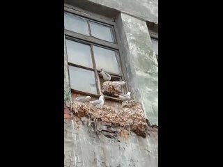 Птичий базар.mp4