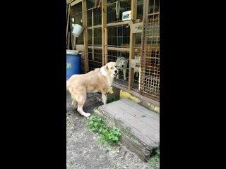 Видео от Марфы Васильевны