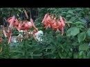 Видео от Цветочный базар от Натальи