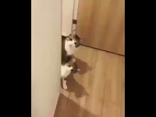 Who are you, human?