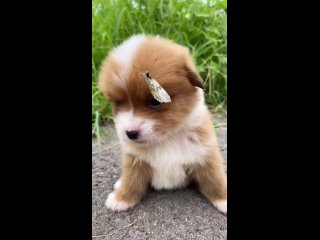 какая приставучая бабочка.mp4