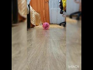 Video by Книжный клуб в «Цветах»