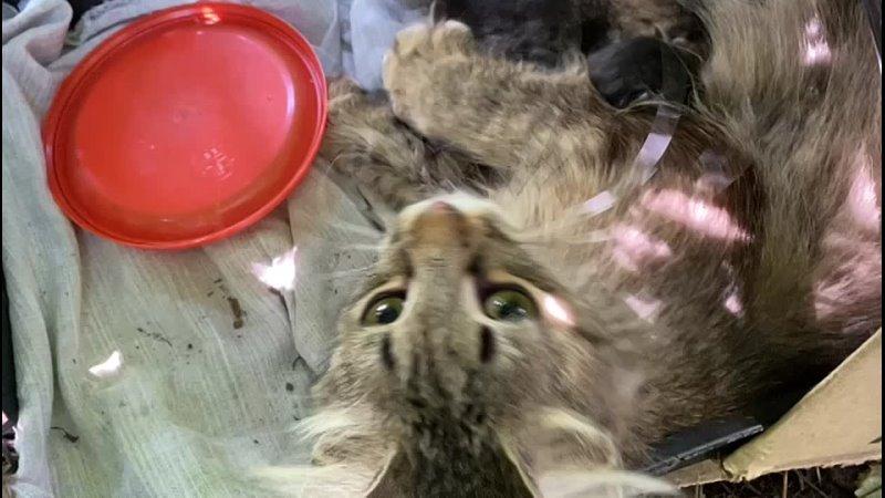 Видео от ХВОСТ ТРУБОЙ г Курск помощь бездомным животным