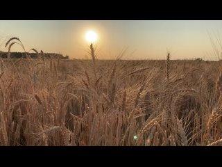 Video by Irina-Petrovna Shukhaeva