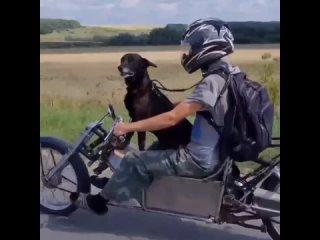 Собака-байкер в Чебоксарском районе