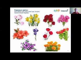 """Занятие 19. Тема """"Цветы"""". Направление: познавательное развитие"""