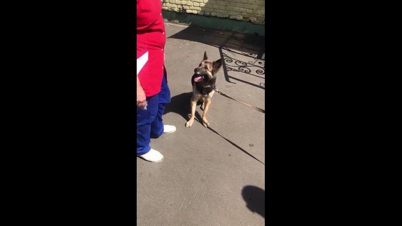 Видео от Будем добрее помощь животным в Орехово Зуево