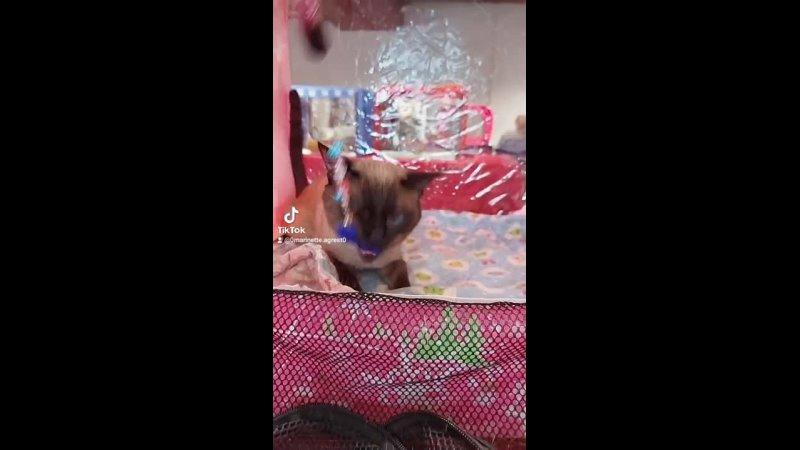 Видео от Светланы Кузнецовой