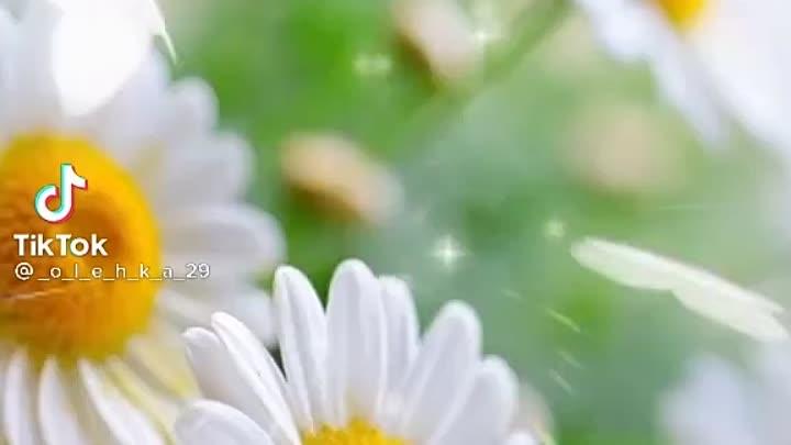 Видео от Маргариты Перлиной