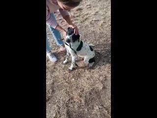 Video by СОВЕТ ВОЛОНТЕРОВ ПО СОБАКАМ КАЗАХСТАНА