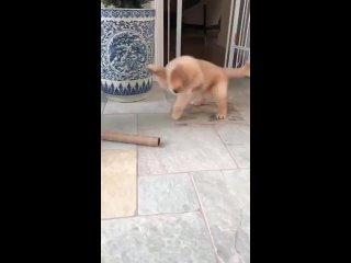 Puppy encounters a feral cardboard tube