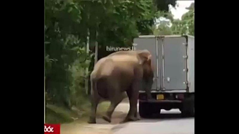 Animals Being Bros