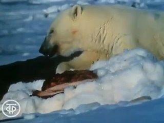Белый медведь (1975)